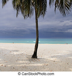 Stormy beach - Detail of coconut palm tree on tropical...
