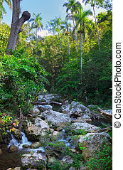 Cuban lanscape with rapids - Detail of cuban vegetation and...