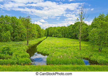 Brook and meadow and forest - Landscape with brook and...