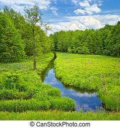 Brook and meadow and forest. - Landscape with brook and...