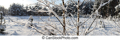 Snowbound branch on sunny day. - The panorama of snowbound...