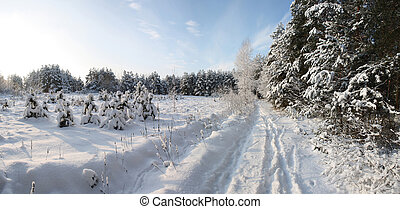 Winter forest in sunny day - The path in winter forest on...
