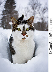 Cat On Snow Looking at the Camera