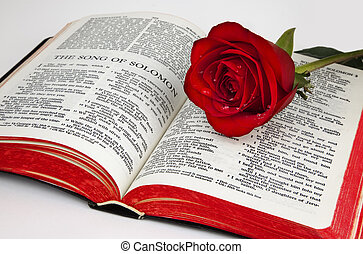 Solomons Rose - A single red rose rests upon the pages of an...
