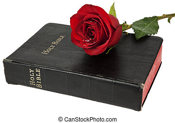 Religion and Romance - Beautiful red rose resting on the...