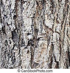 樹, 結構