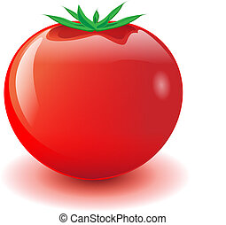red tomato - vector illustration of one glossy red tomato