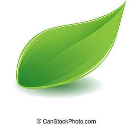 green leaf - vector illustration of one glossy green leaf