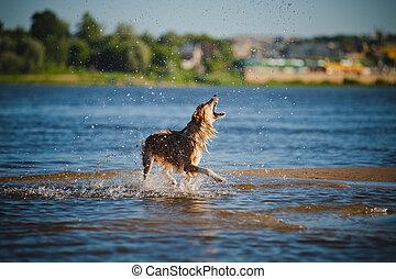 cão, pegando, água, esguichos