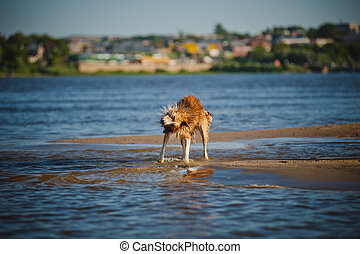 Happy dog shakes in the water