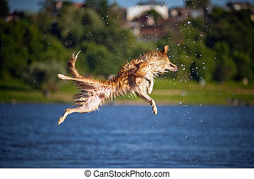 Happy dog jumping up in the water