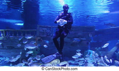diver in oceanarium feeding fish