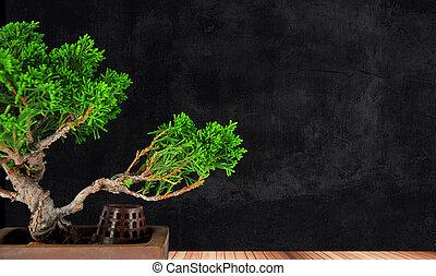 bonsai garden - bonsai tree juniper class on a wooden...