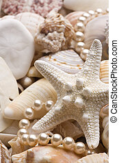 seashell background with pearls
