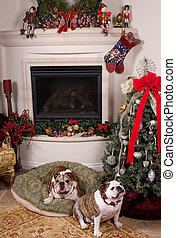 Christmas Time - Two friendly bulldogs near the fireplace...