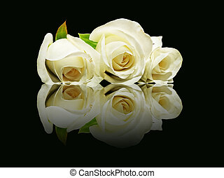 Three white roses with reflection.