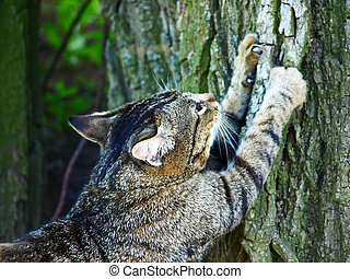 Cat sharpening claws on a tree. - Gray tabby cat sharpening...