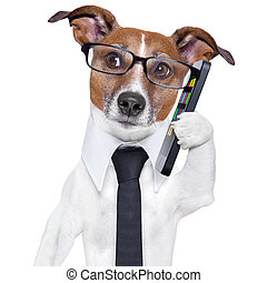 smartphone dog - business dog with a smartphone and glasses