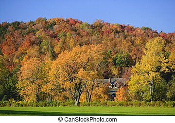 Hillside of colorful maple trees in Vermont in the autumn -...