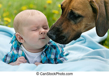 Baby and Dog - Little boy kissing big dog