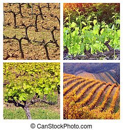 Four Seasons In Provence: collage with 4 photos of vineyards...