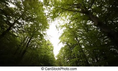 POV Driving In Forest - driving in a forest in south tyrol,...