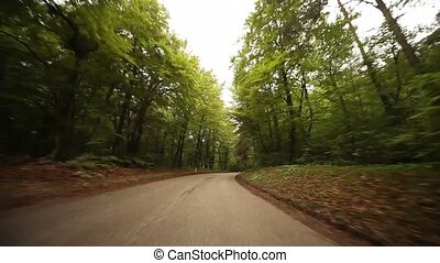 Timelapse POV In Forest - driving in a forest in south...