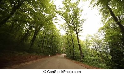 POV Driving In Forest - POV video footage of driving in a...