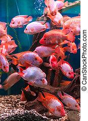 Tropical freshwater aquarium
