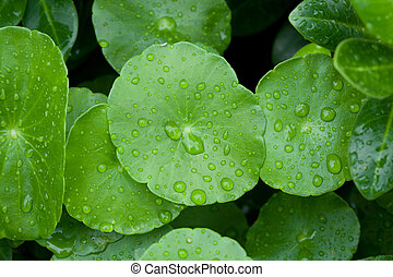 Closeup of green leaf with water drops