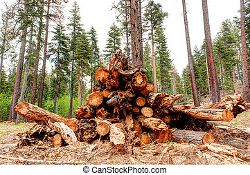 Trees cut down in clearcut area of forest - Clearcut area of...