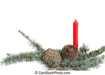 Blue Cedar Atlas with red candle - Blue Cedar Atlas (Cedrus...
