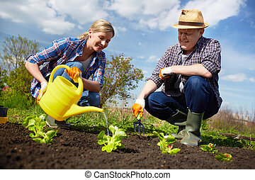 Watering plants - Image of couple of farmers seedling and...