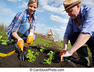 Working together - Image of couple of farmers seedling...