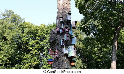 bird house dead tree - wooden bird nest boxes houses hang on...
