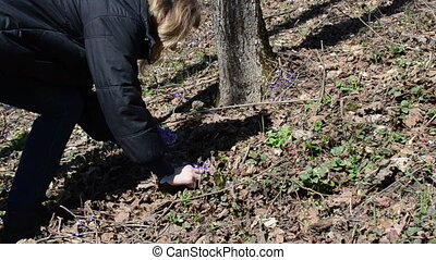 first spring flowers pick - girl in the woods reaps first...