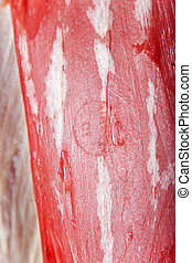 Close-up of fresh meat in a butcher shop - Close-up of fresh...