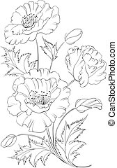 Poppies flower. - Poppies flower freehand isolated on a...