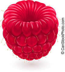 Realistic raspberries. Illustration on white background for...