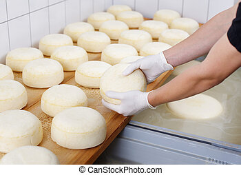 Cheese dairy - Ripening domestic cheese at the cheese dairy