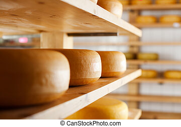Many cheese-wheels maturing on shelves