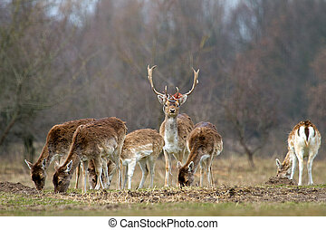 Rubbish dear - A herd of wild dear and garbage on the...