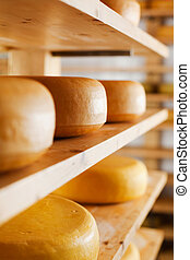 Cheese-wheels maturing on shelves