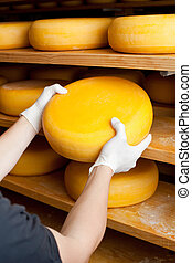 Cheese maker selects a mature cheese - Factory worker keep...