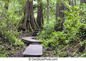 Forest boardwalk. - Forest boardwalk, Pacific Rim National...