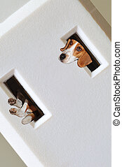 Beagle Dog Peeking Out Of Extension Cord Holes