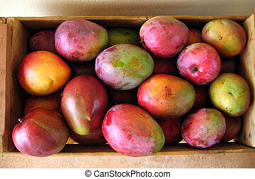 Box of mango fruits - A box full of fresh mango fruits