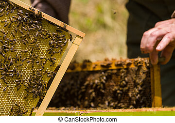 Beekeeper working on honeycomb with bees and honey around...