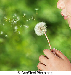 Girl with dandelion - Cute little girl is blowing to...