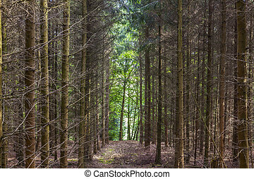 pattern of trees in forest - pattern of trees in the green...